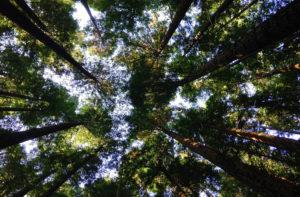 proteger-el-medio-ambiente-greta-fundacion-naturaleza-bio-fundacion-juan-peregrin-alicante